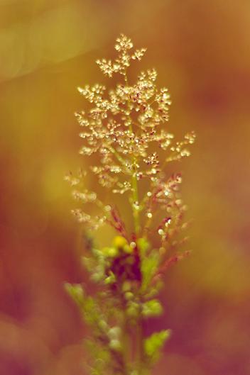 Natuur-fotograaf-Brabant-landschap-fotografie