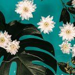iPhone-wallpaper-flowers-nikki-segers-fotografie